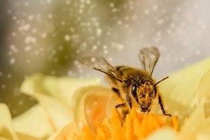 TopCashBack or Nectar